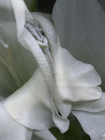女人二十种外阴照片:女人外阴的形状照片与生理知识
